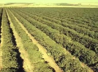 Rede de Fazendas Protegidas atinge em julho cerca de 300 mil propriedades rurais